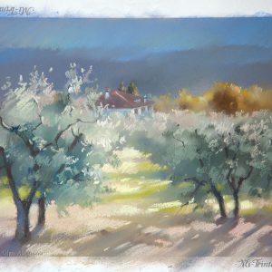 Olive gardens 1 21×29. 2013