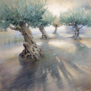 Catalan olive trees 90×90. 2016
