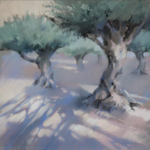Sunny olive trees 48×48. 2016